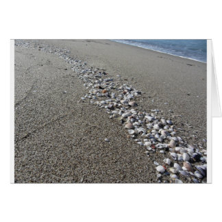 Seashells on sand. Summer beach background Card