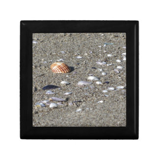 Seashells on sand. Summer beach background Gift Box