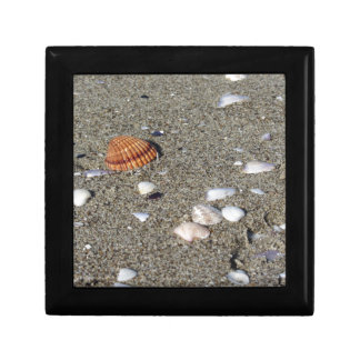 Seashells on sand. Summer beach background Jewelry Boxes