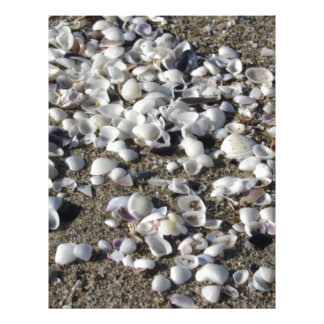 Seashells on sand. Summer beach background Letterhead