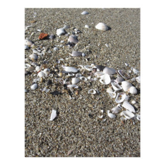 Seashells on sand. Summer beach background Letterhead Design