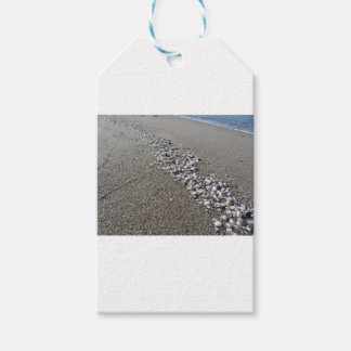 Seashells on sand. Summer beach background Pack Of Gift Tags