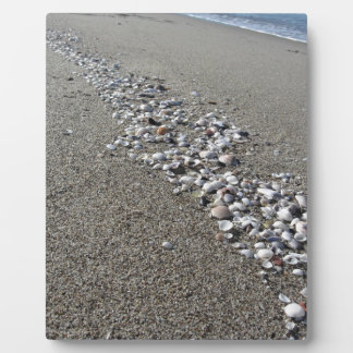 Seashells on sand. Summer beach background Plaque
