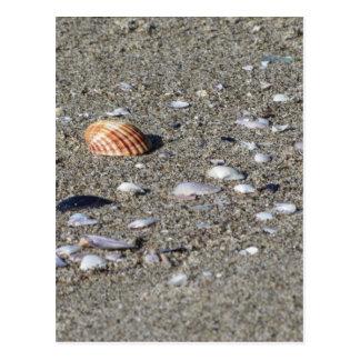 Seashells on sand. Summer beach background Postcard