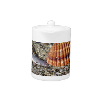 Seashells on sand Summer beach background Top view