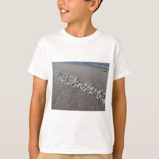 Seashells on sand Summer beach background Top view