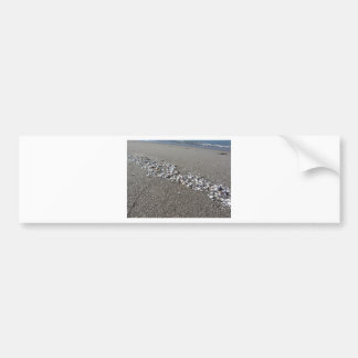 Seashells on sand Summer beach background Top view Bumper Sticker