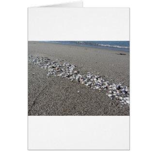 Seashells on sand Summer beach background Top view Card