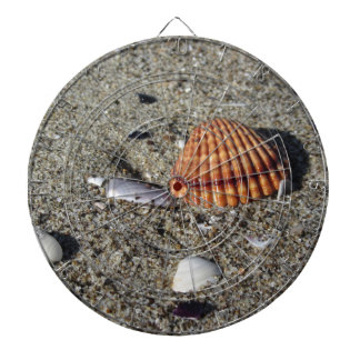 Seashells on sand Summer beach background Top view Dartboard