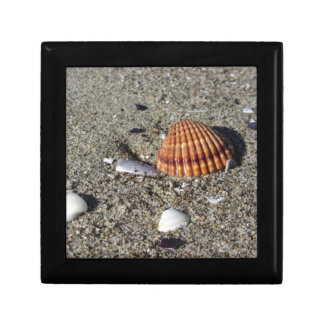 Seashells on sand Summer beach background Top view Gift Box