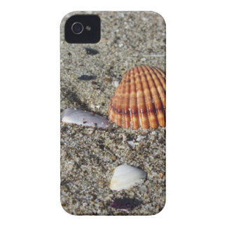 Seashells on sand Summer beach background Top view iPhone 4 Cover