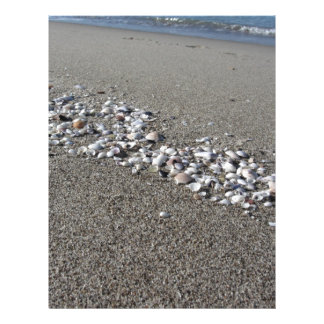 Seashells on sand Summer beach background Top view Letterhead