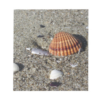 Seashells on sand Summer beach background Top view Notepad
