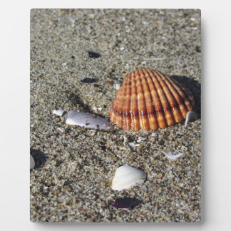 Seashells on sand Summer beach background Top view Plaque
