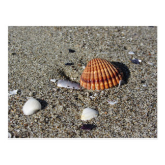 Seashells on sand Summer beach background Top view Postcard
