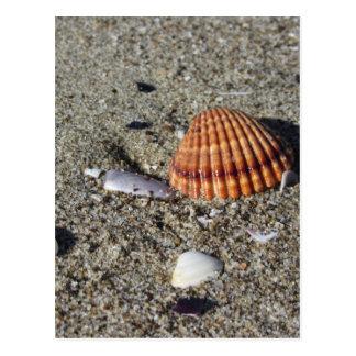 Seashells on sand Summer beach background Top view Postcard