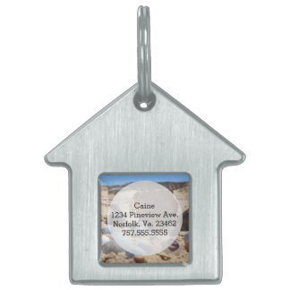 Seashells on the Beach by Shirley Taylor Pet Name Tags