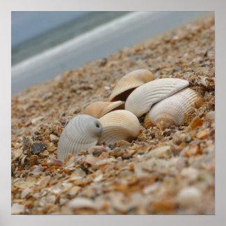 Seashells on the beach fine art photograph print