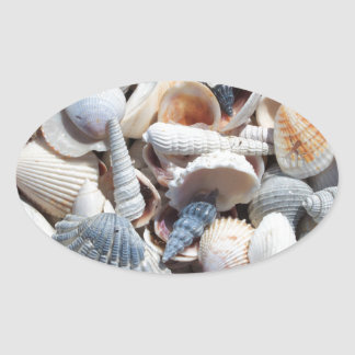 Seashells Oval Sticker