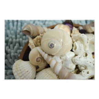 Seashells ! photo print
