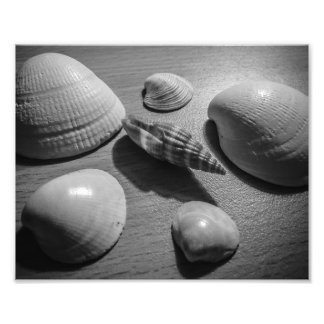Seashells Photo Print