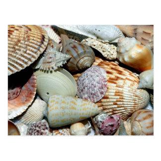 Seashells Photography Sanibel Island Florida Shell Postcard