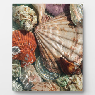 Seashells Plaque