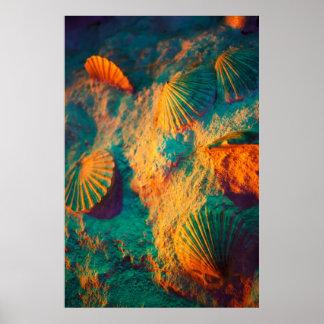 Seashells Print