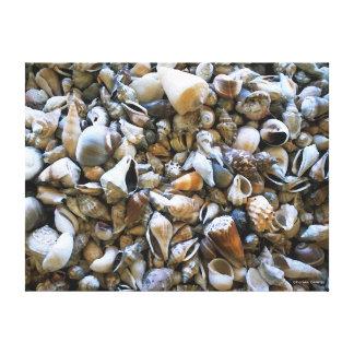 """Seashells"" Wrapped Canvas Print"