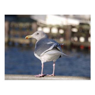 Seaside Gull Postcard
