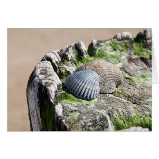 Seaside views - shells card