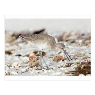 Seaside Willet Postcard