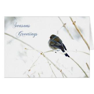 Seasons Greetings Card - Junco in Snow