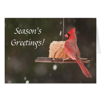 Season's Greetings! Christmas Cards