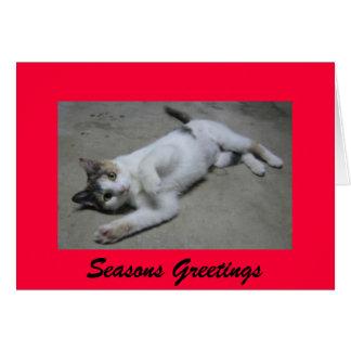 Seasons Greetings from Mollie Greeting Card