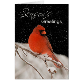 Season's Greetings - Red Cardinal Card