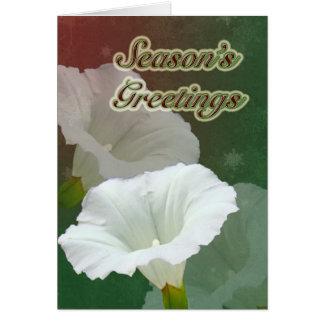 Season's Greetings - White Bindweed Card