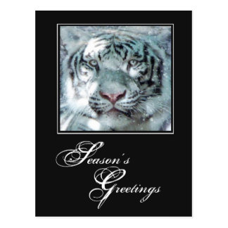 Season's Greetings Winter White Tiger Postcard