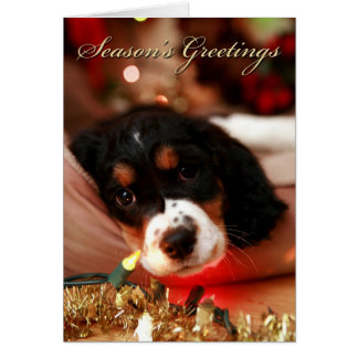 seasons greetins springer spaniel card