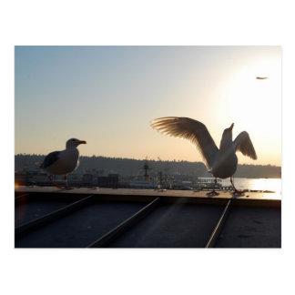 Seattle Seagulls Post Card