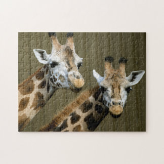Seattle, Washington. Two giraffes Jigsaw Puzzle
