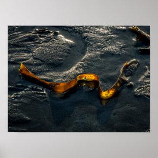 Seaweed Poster/Print Poster