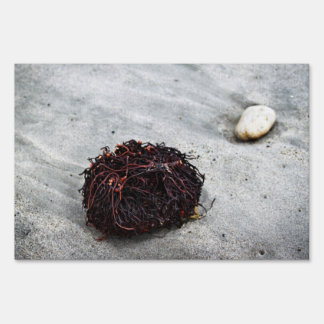 Seaweed Roots