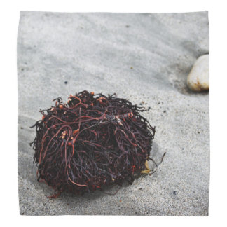 Seaweed Roots Bandana