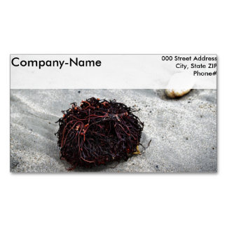 Seaweed Roots Business Card Magnet