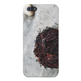 Seaweed Roots iPhone 5/5S Case
