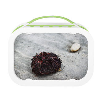Seaweed Roots Lunch Box