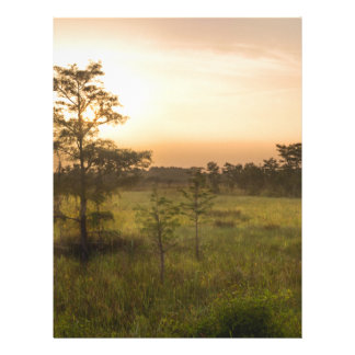 Second Dawn in Fakahatchee Strand Letterhead