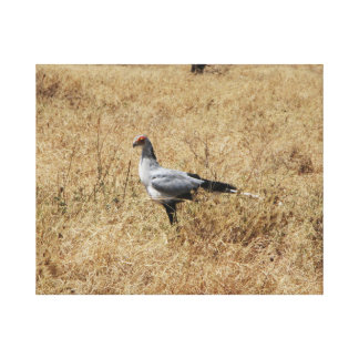 Secretary Bird in Tanzania Canvas Print