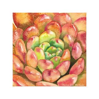 Sedeveria 'Pink Ruby' by Debra Lee Baldwin Canvas Print